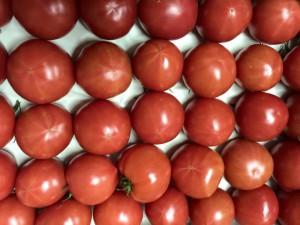 谷口トマト